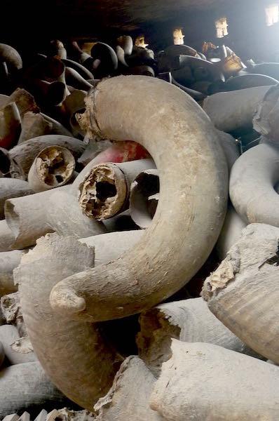 Le marché aux cornes en Inde