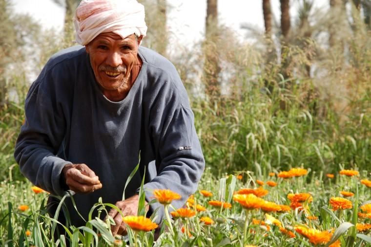 100224_farmer-marigolds