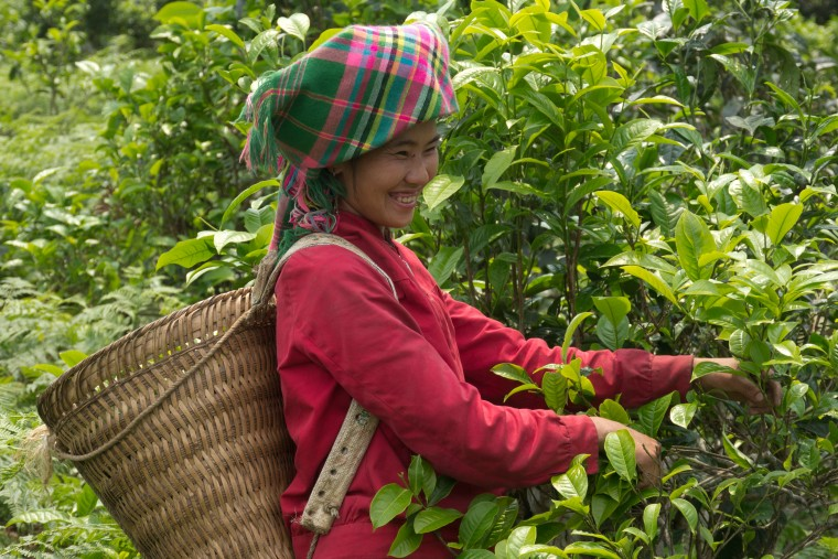 160420-vietnam_tea-6